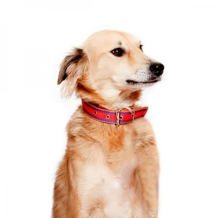"""Doggy """"Princess"""" Moksie"""